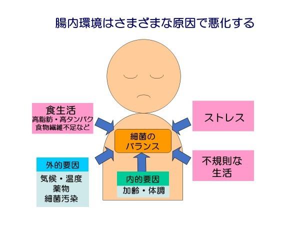 腸内細菌.jpg