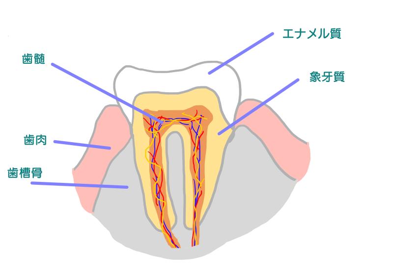 歯の痛みの原因.png