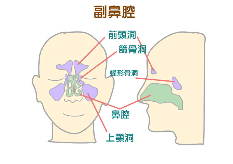 副鼻腔炎.png